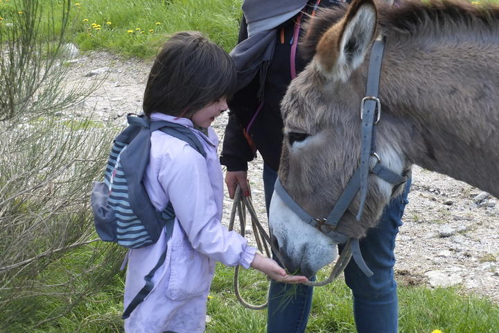Ride with a donkey between the Cévennes and the Ardechoise mountain